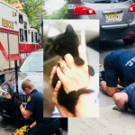 Jersey City firefighters rescue kitten from car engine, place her in foster care