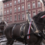 Budweiser Clydesdales trot their way down Washington Street in Hoboken
