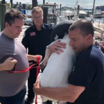 Bayonne firefighters rescue dog from Kill van Kull, successfully reunites pet with owner