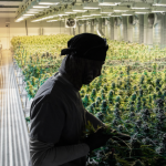 If N.J. legalizes marijuana, Lavarro, Solomon propose dedicating local tax to JCPS
